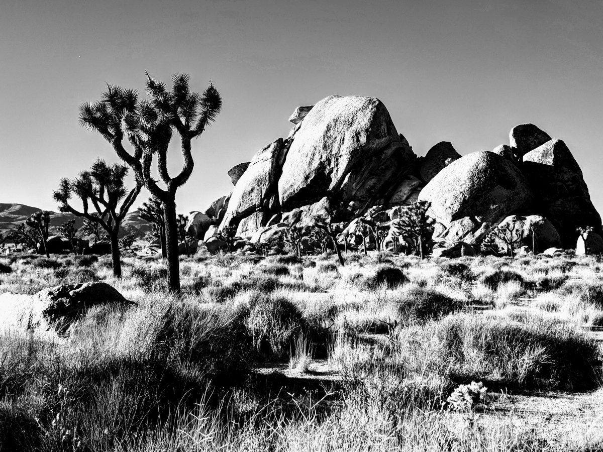 Exploring the California Desert – Visiting Joshua Tree