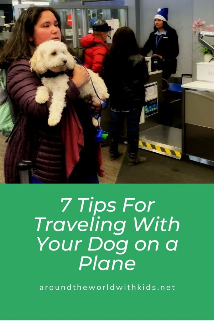 Pin - 7 Tips for Traveling with your dog on a plane